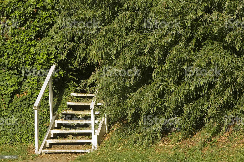 Into the Green royalty-free stock photo