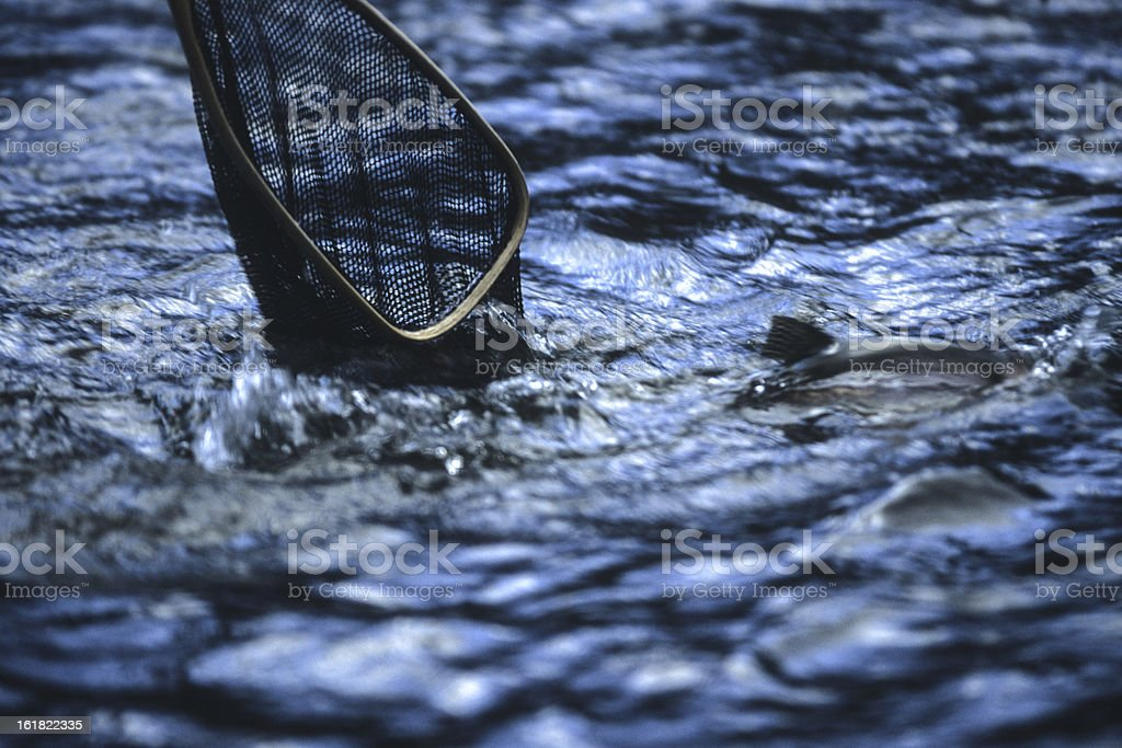 Into The Net royalty-free stock photo