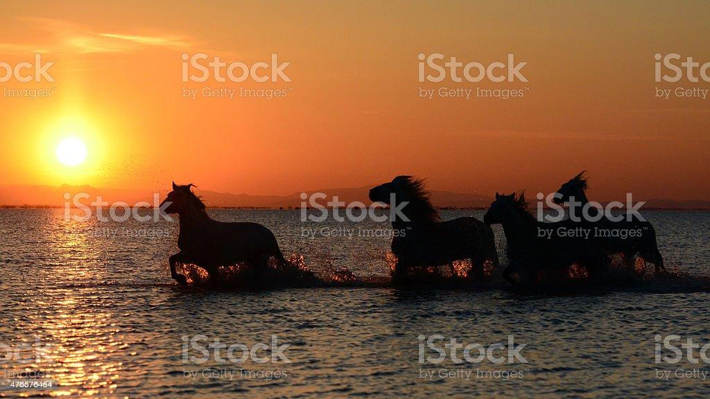 Into the sunrise stock photo