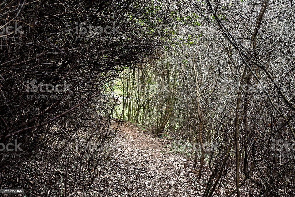 Into the thicket stock photo