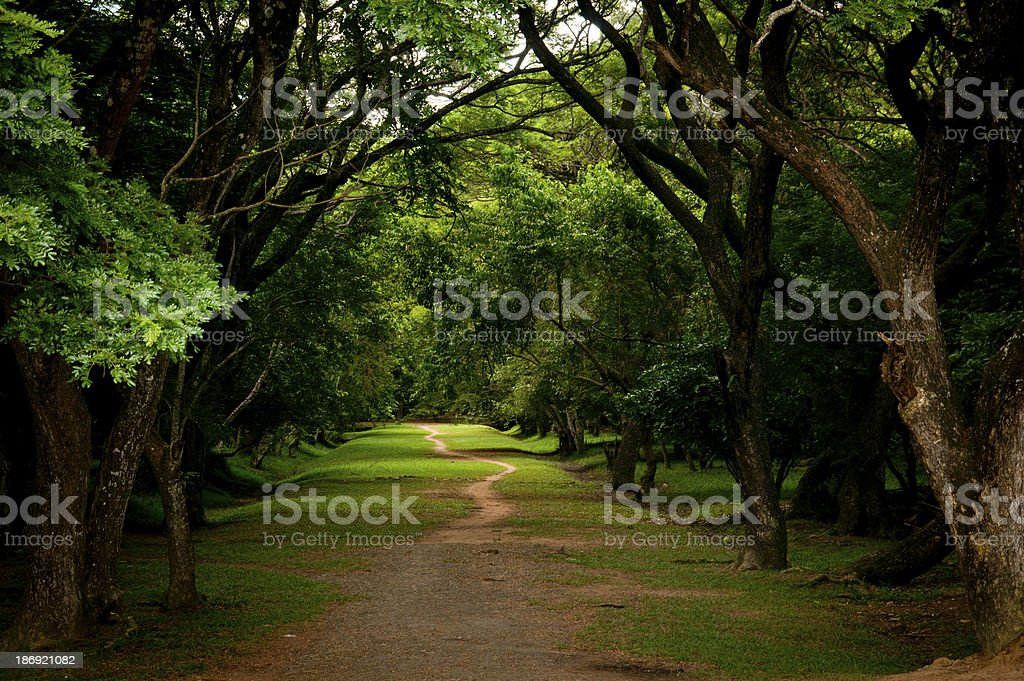 Into the Unknown royalty-free stock photo