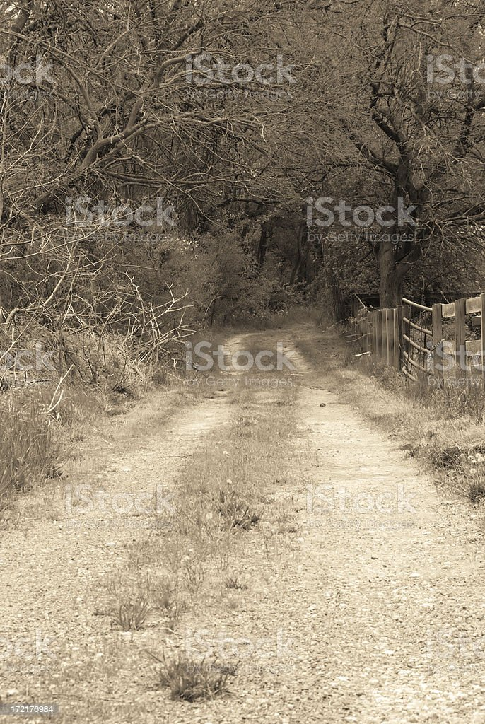 Into The Woods royalty-free stock photo