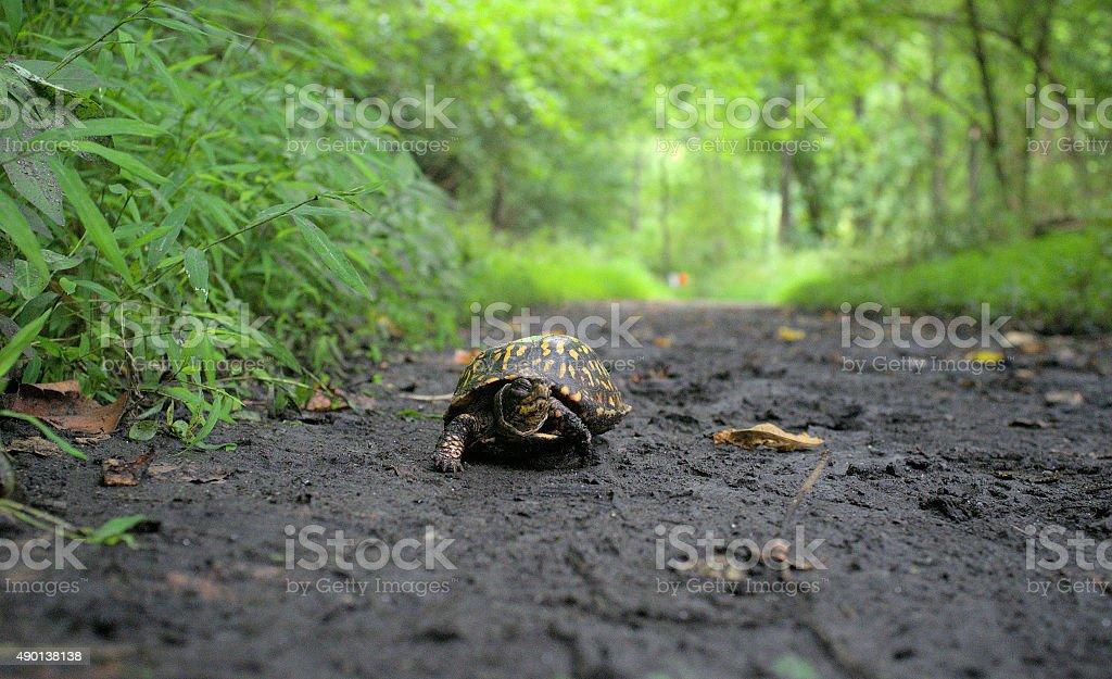 Intrepid Trekker stock photo
