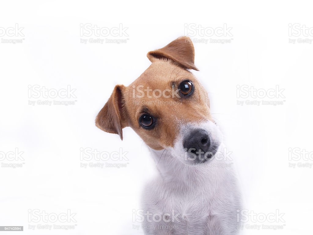 Intrigued stock photo