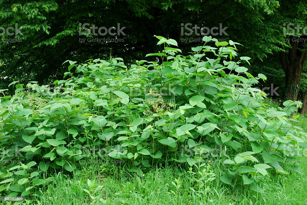 Invasive species on the rise in spring stock photo