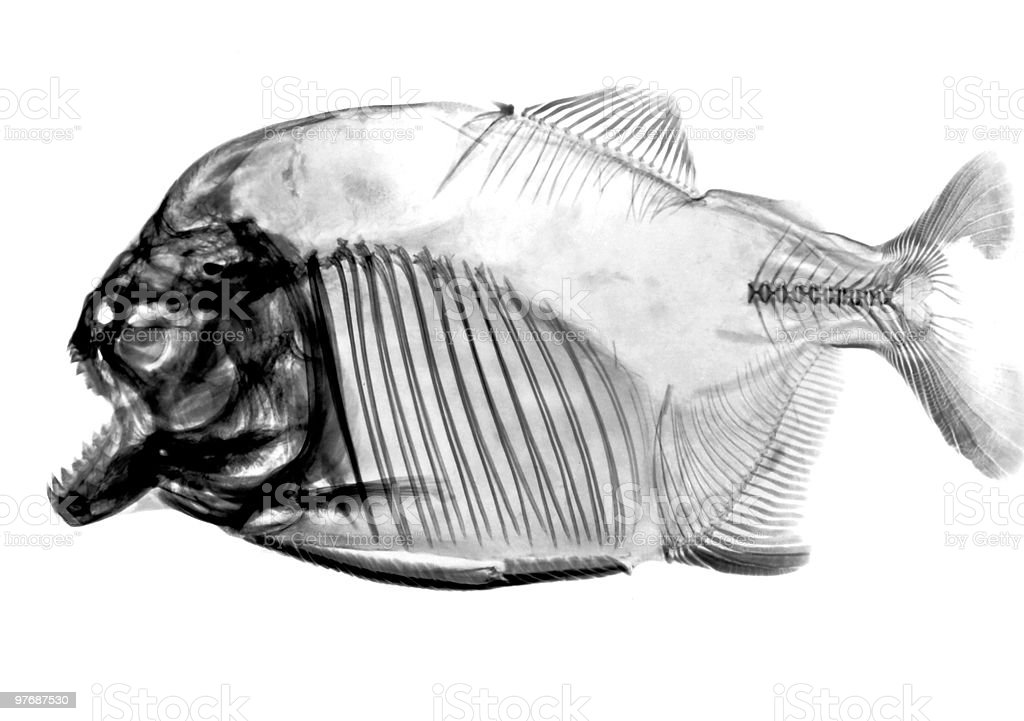 inverted fish x-ray stock photo