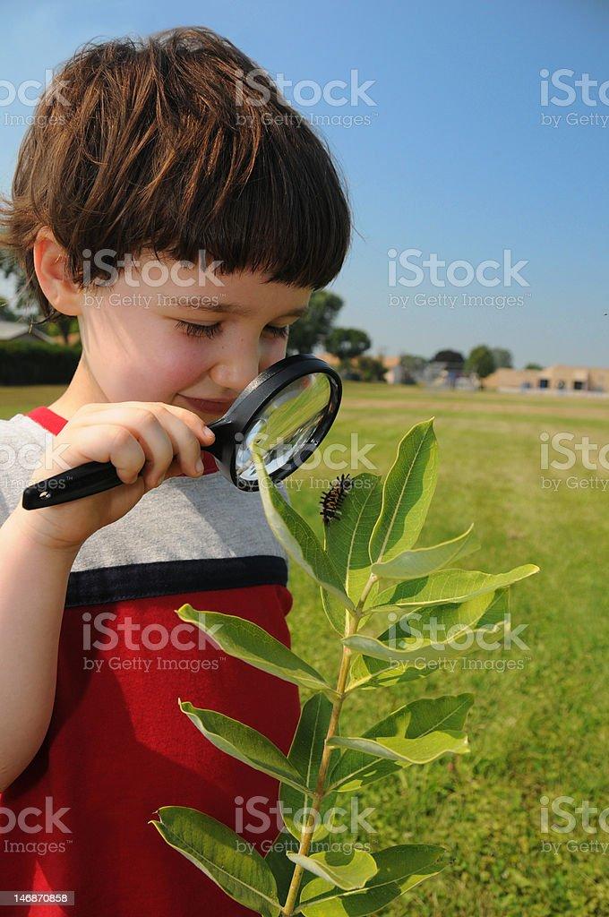 Investigating nature closeup stock photo