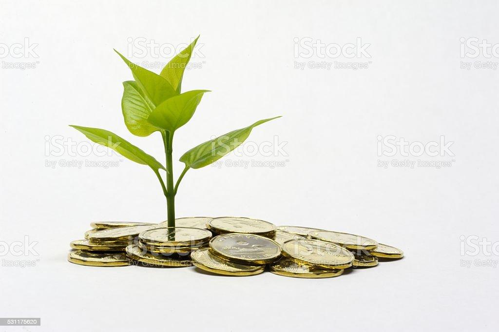 Investing Money Concept stock photo