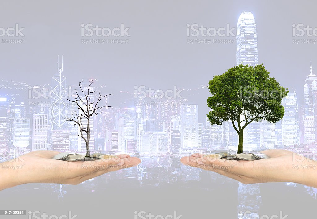 Investment concept plant Investment concept plant Investment con stock photo