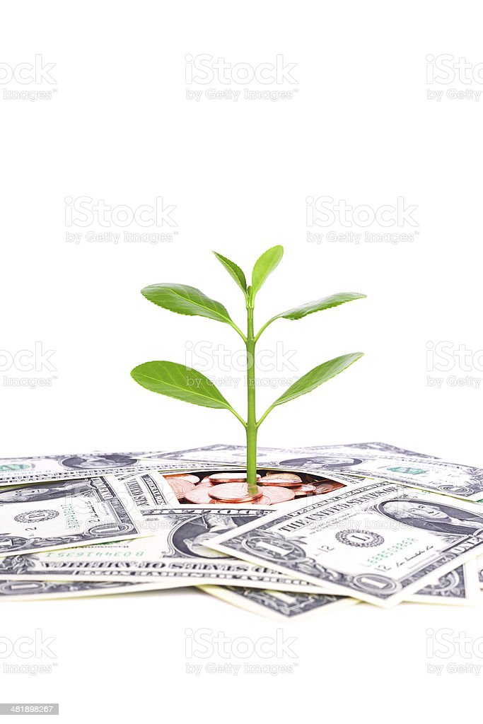 investment plan:coin and growing plant isolated on white background stock photo