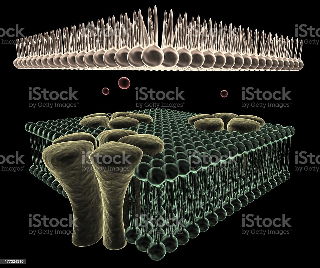 Ion Channels of a Cell stock photo