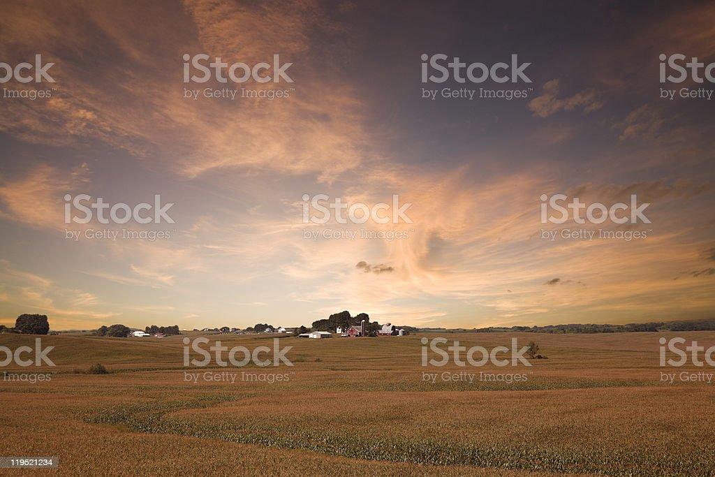 Iowa Corn Field Sunset. royalty-free stock photo