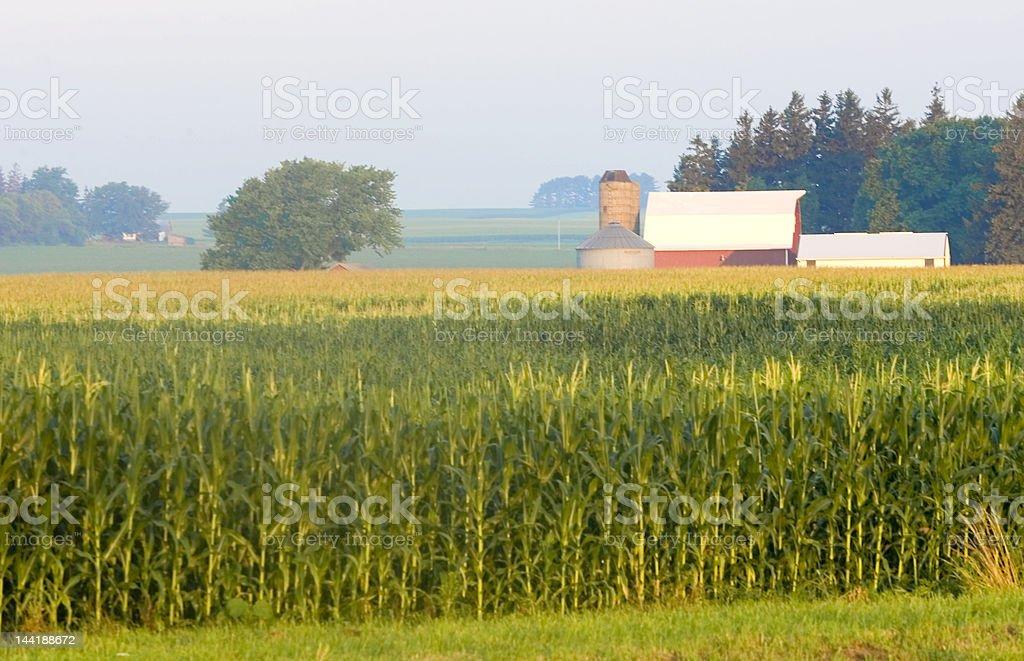 Iowa Corn Field with Silo royalty-free stock photo