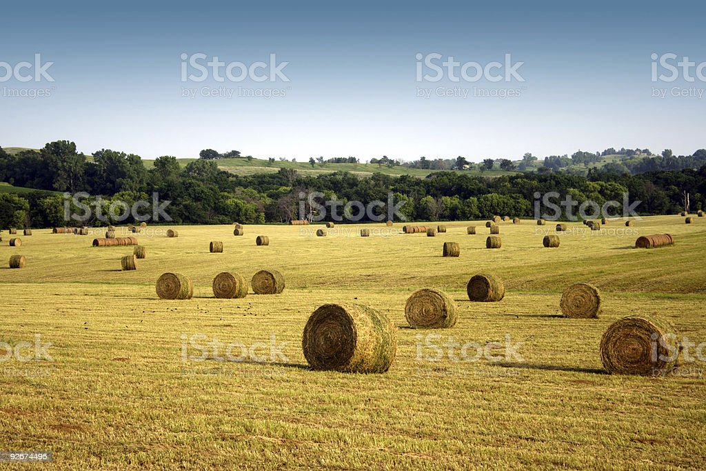 Iowa Hay stock photo
