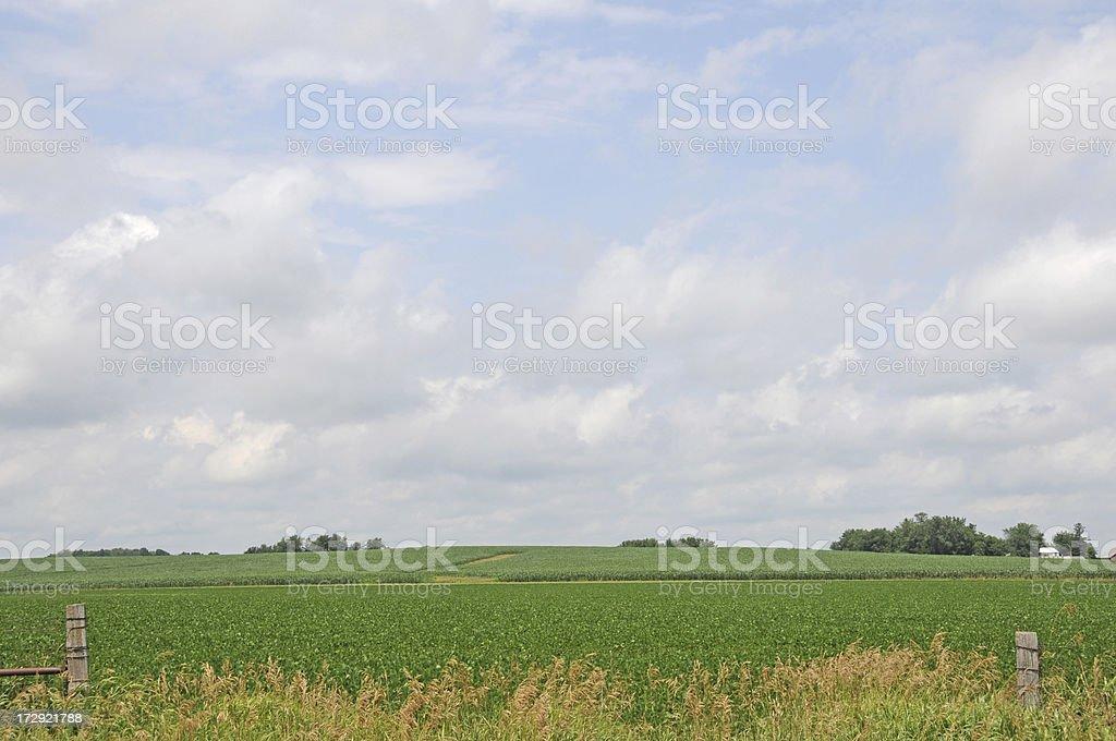Iowa Soybean Field royalty-free stock photo