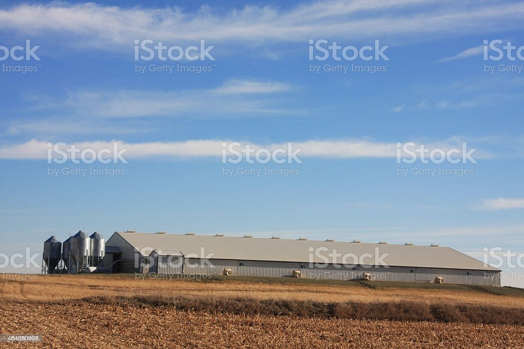 Iowa Swine Barns in Autumn stock photo