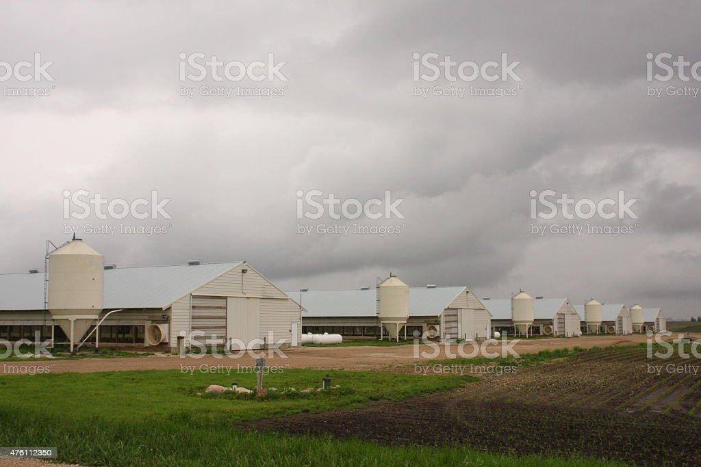 Iowa Turkey Barn Exteriors stock photo