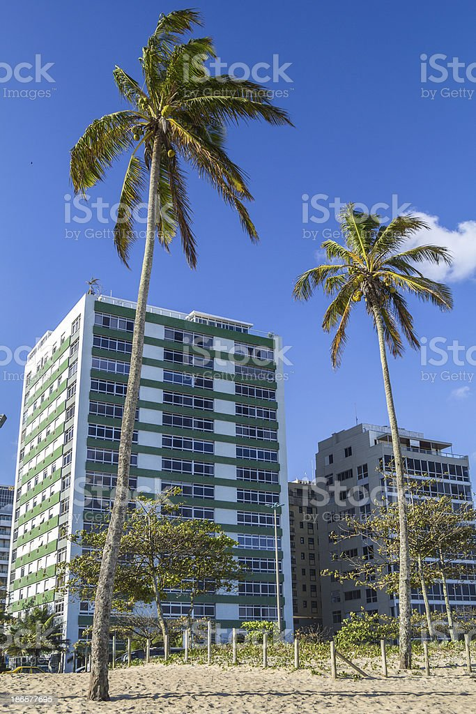 Ipanema palm tree royalty-free stock photo