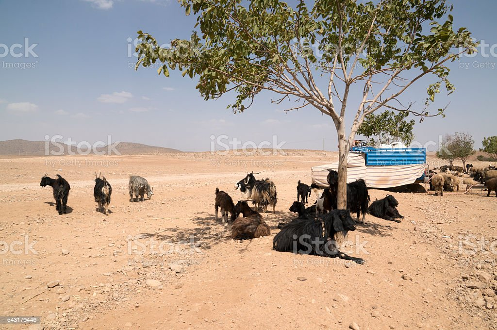 Iraninan Nomad camp stock photo