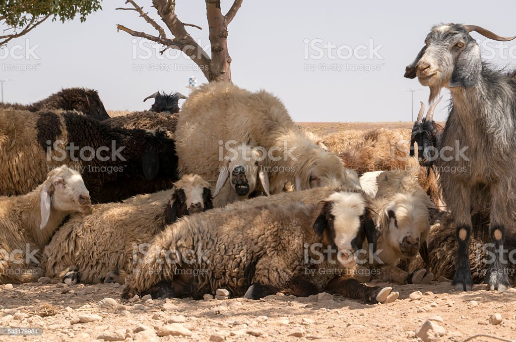 Iraninan Nomad family cling to a disappearing way of life stock photo