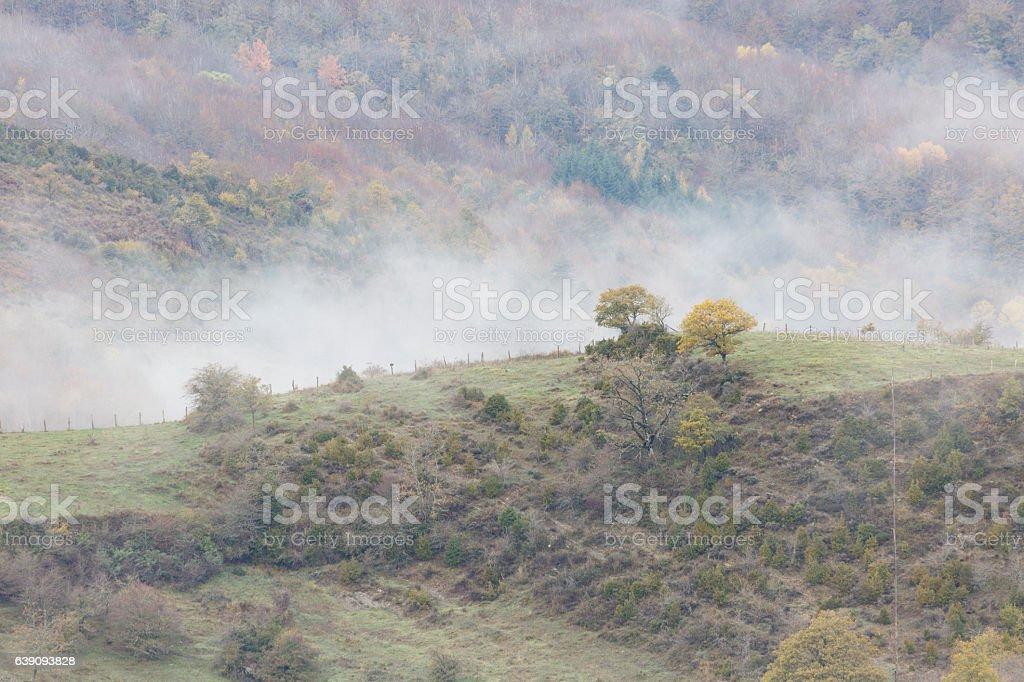 Irati forest, Pamplona, Navarra, Spain. stock photo