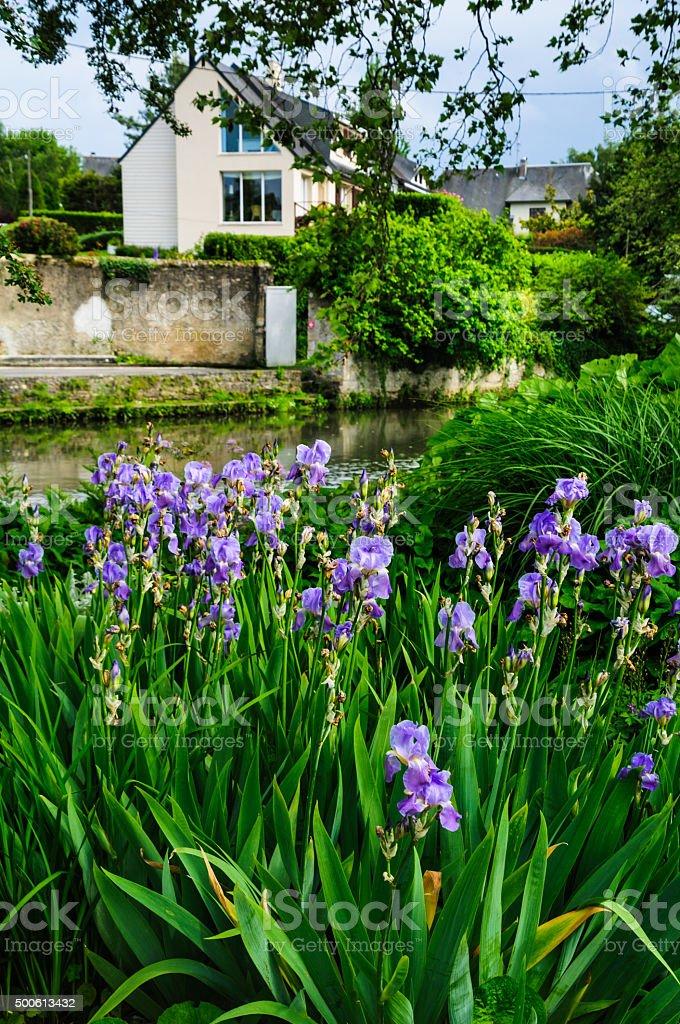Iris along the River stock photo