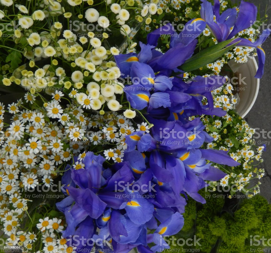 Iris and Sicilian chamomile flowers stock photo