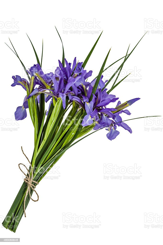 Iris flowers, isolated on white stock photo