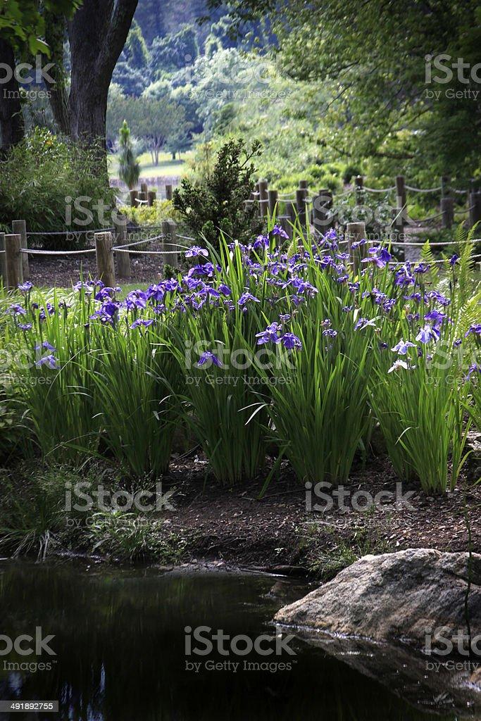 Iris in park stock photo