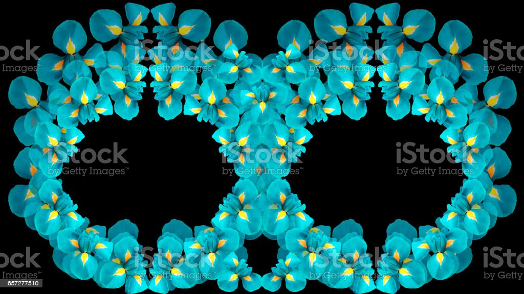 Irises turquoise flowers. two rings. circles of flowers on a black background isolated. Floral composition.  For design. Nature.'n stock photo