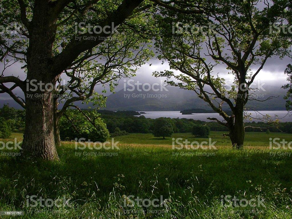 Irish Forest royalty-free stock photo