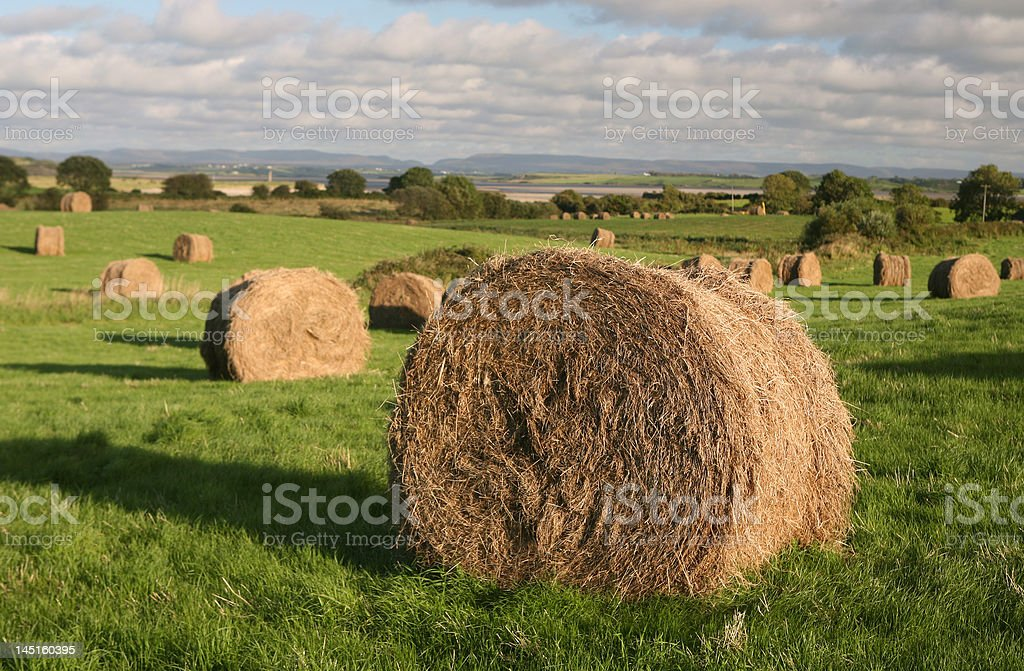 Irish Harvest royalty-free stock photo