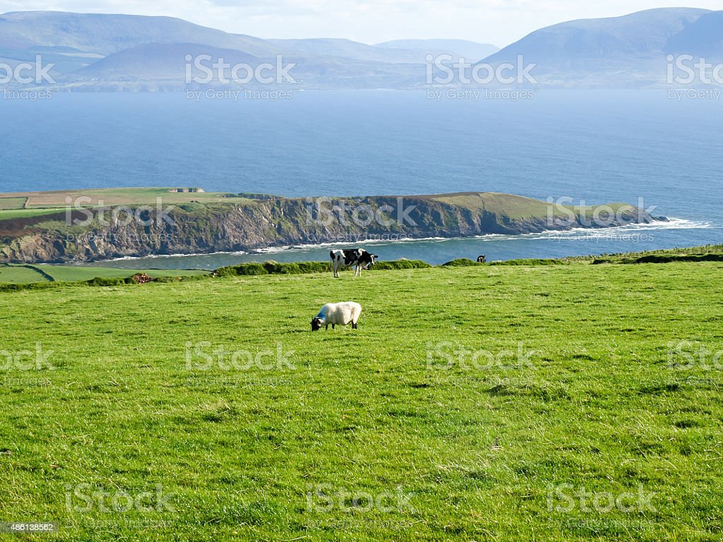 Irish impression royalty-free stock photo