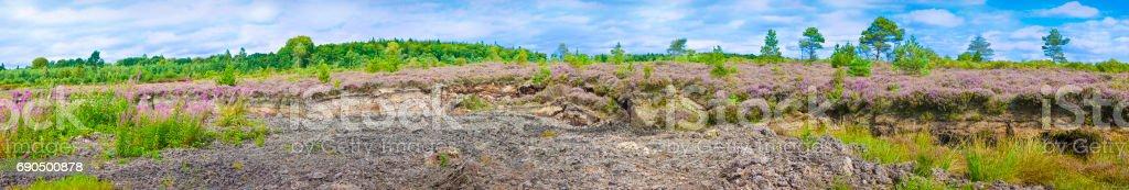 Irish peat bog landscape - (Ireland - Europe) stock photo
