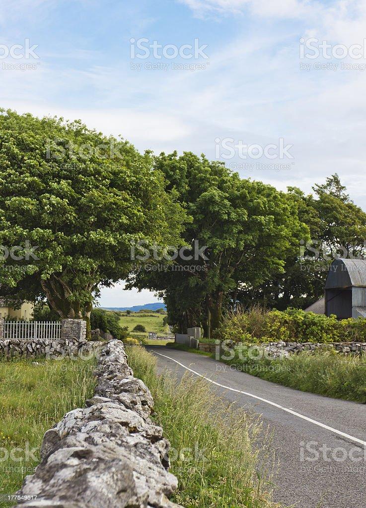 Irish Road Through the Trees royalty-free stock photo