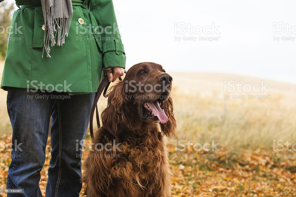 Irish Setter Dog & Person royalty-free stock photo
