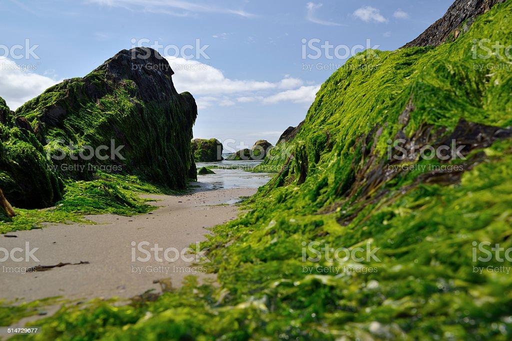 Irish stone coast stock photo