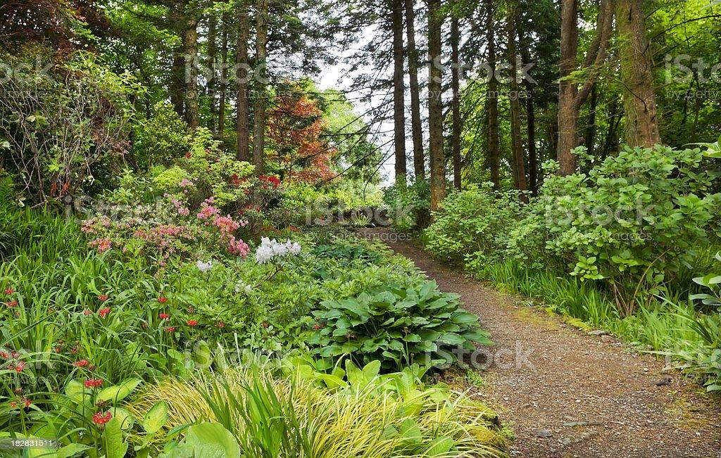 Irish Woodland Garden stock photo