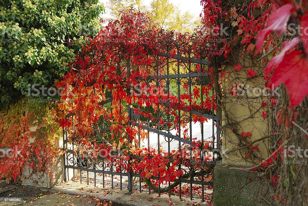 Iron gate and red leaves royalty-free stock photo