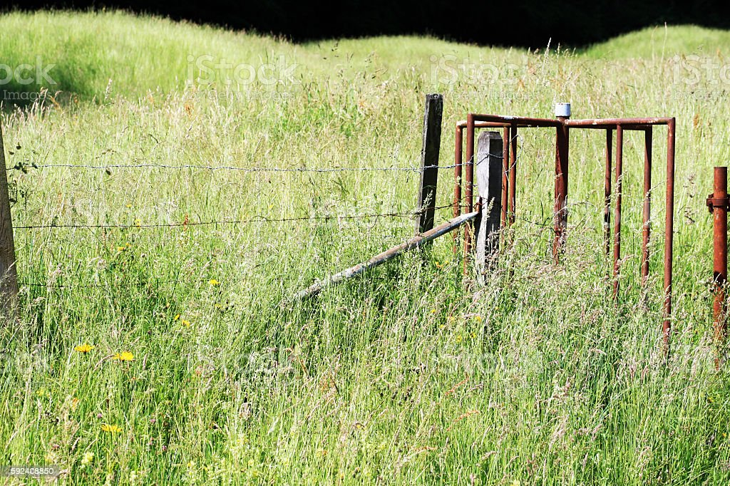 iron-gate-rusty-in-high-grass.jpg stock photo