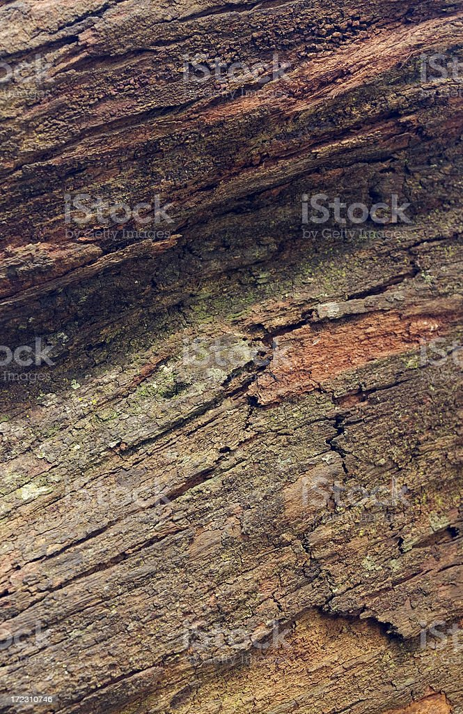 Ironwood, close-up view stock photo
