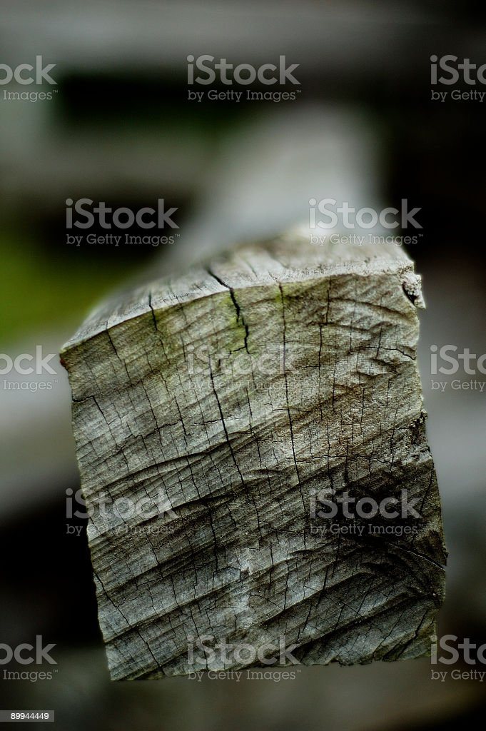 Ironwood stock photo
