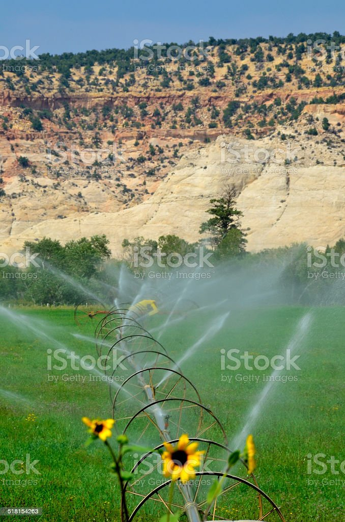 Irrigated Field stock photo