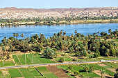 Irrigated fields along the Nile River