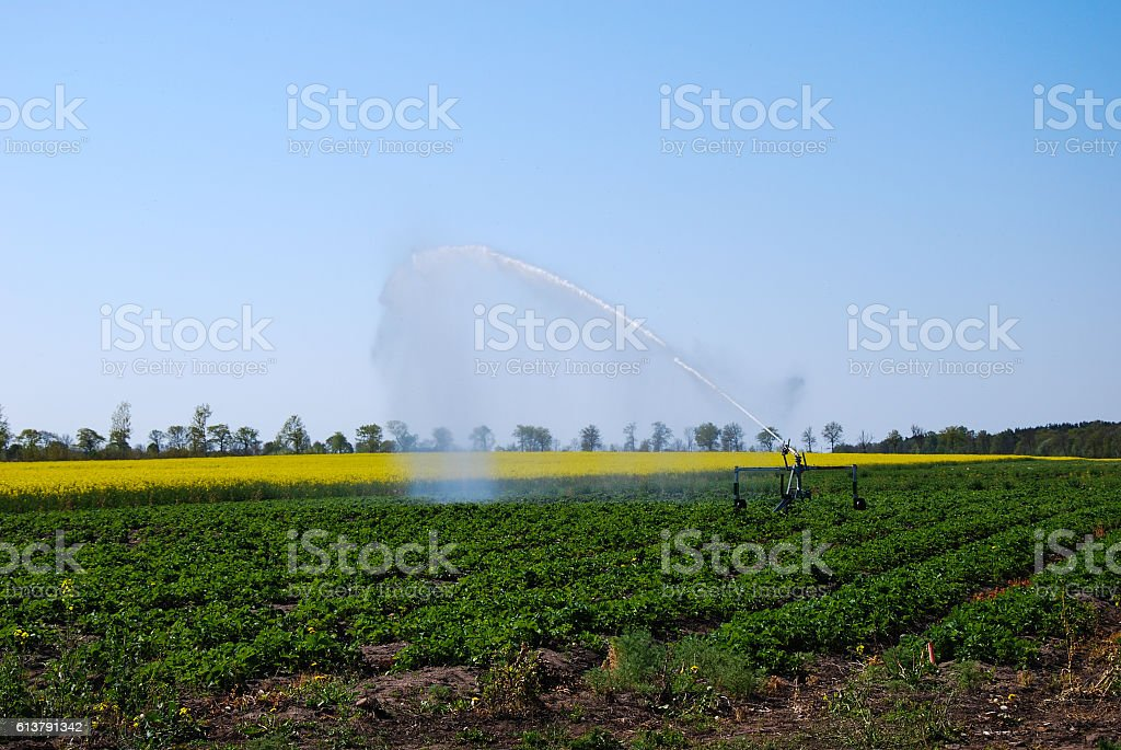 Irrigation av a rural plantation stock photo