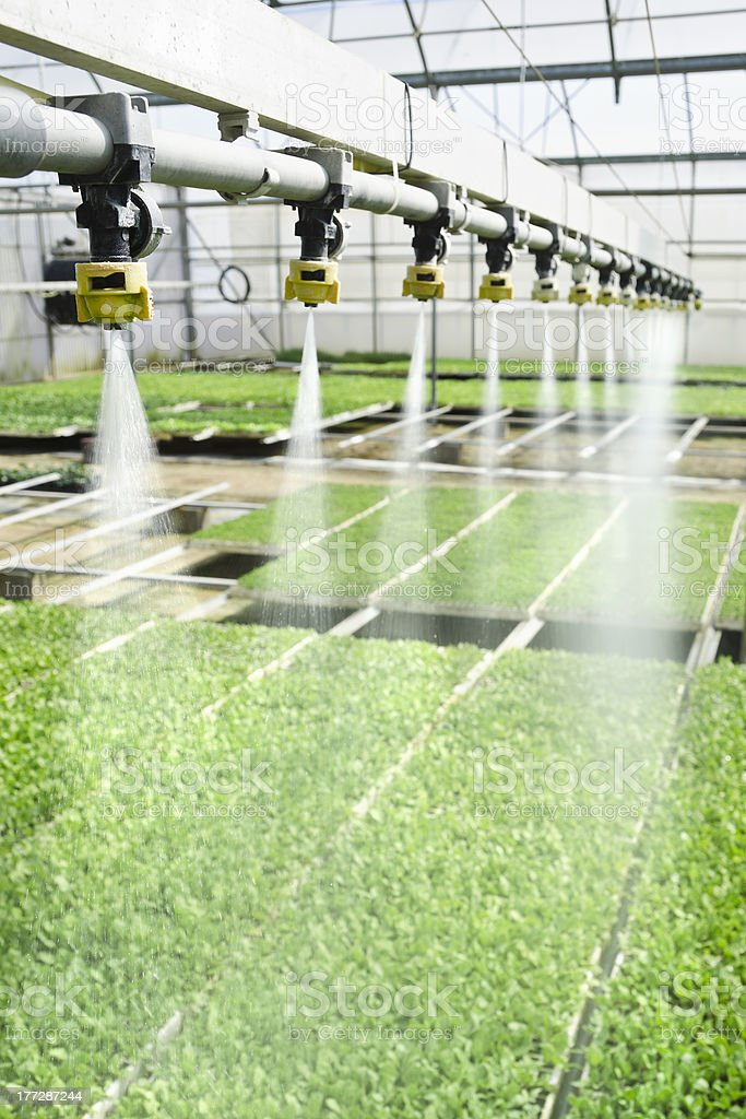 Irrigation being used over plants stock photo