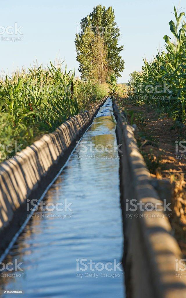 Irrigation Canal Corn Crops - Canal de Riego  Cultivos  Maiz stock photo