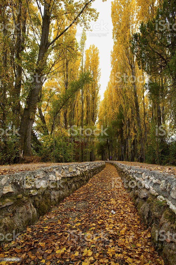 Irrigation Canal in Autumn royalty-free stock photo