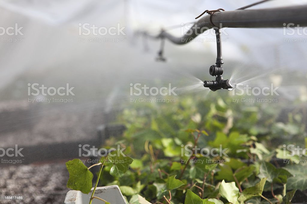 Irrigation in the greenhouse royalty-free stock photo