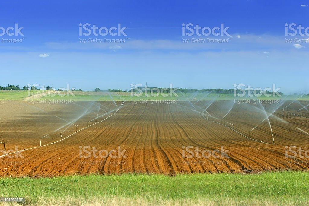 Irrigation of farmland stock photo